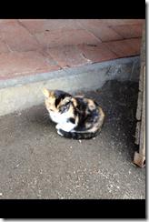 Schnappschuss Katze