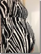 Zebrazelt